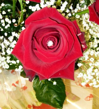 Red Rose With Crystal Pin